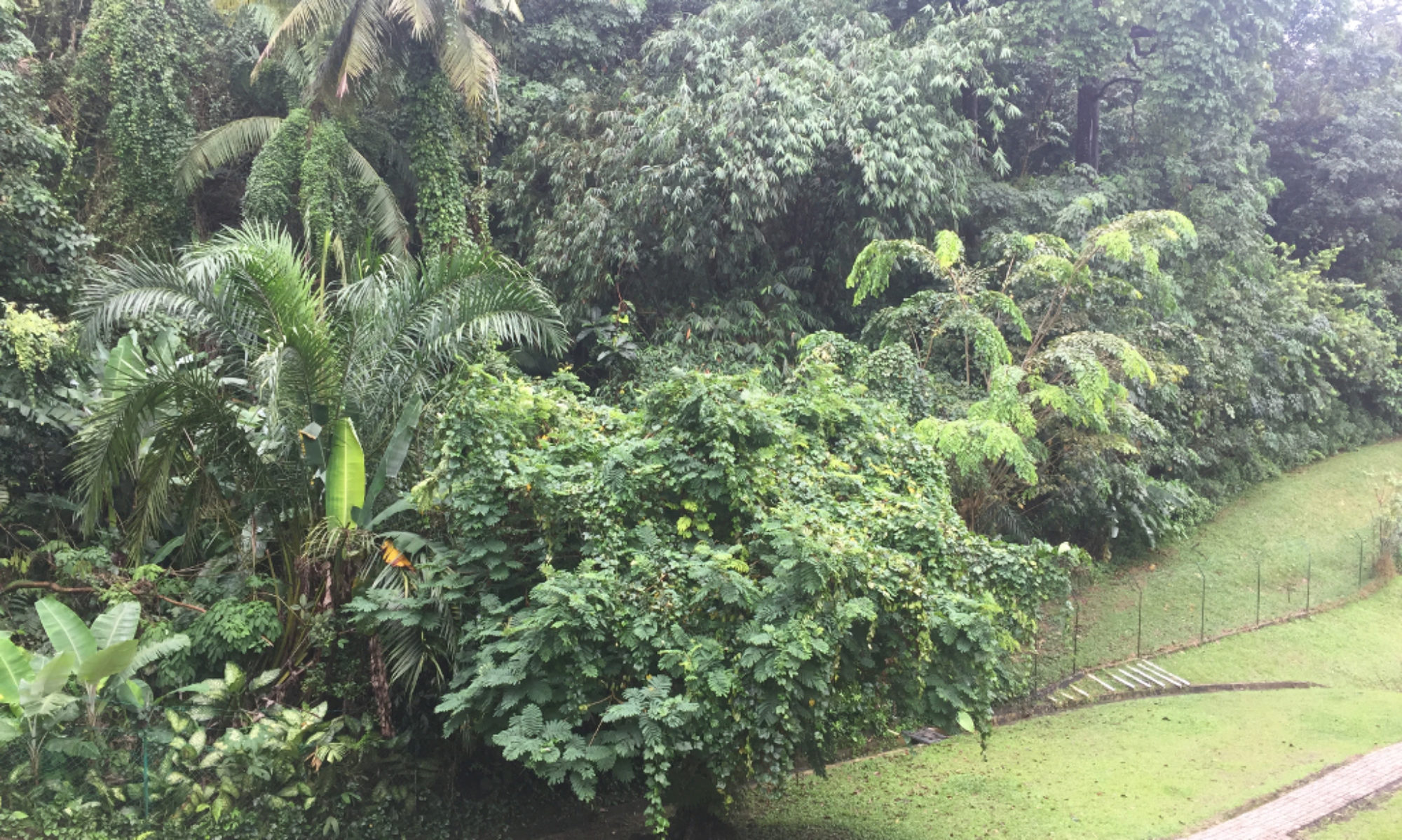 TropicalTex